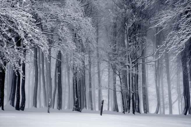 Ein Wald mit schneebedecktem Boden und Bäumen